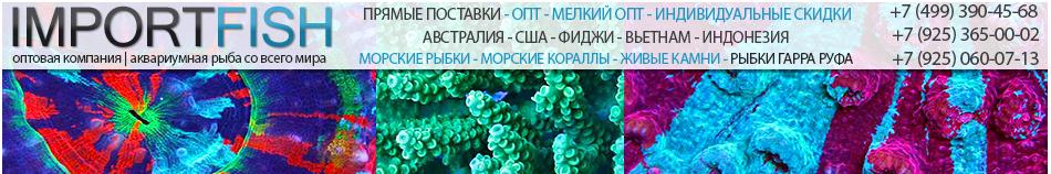 ImportFish.ru