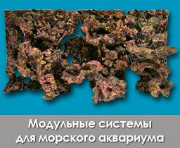rocks_importfish_111
