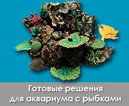 rocks_importfish_112