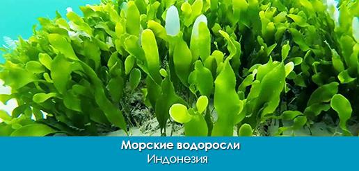 PLANTS_importfish