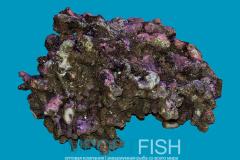 live_rocks_importfish_1