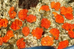 red-sun-corals_800x438
